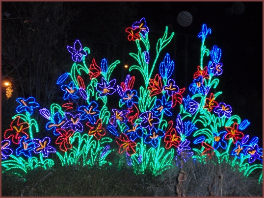 Light Flowers<br /><br />Albuquerque Biopark River of Lights