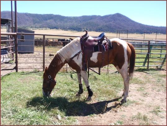 Horse (Valles Caldera)