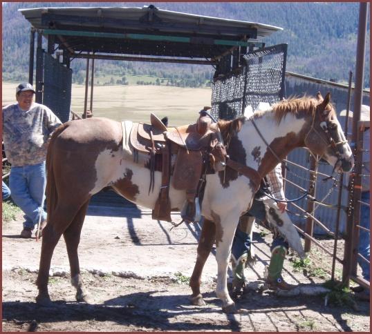 Horses (Valles Caldera)
