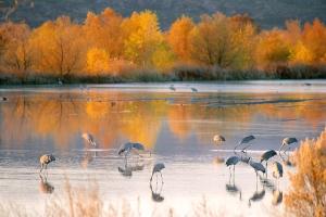 cranesfall