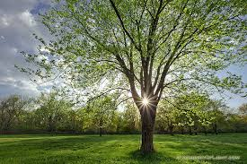 springtrees1