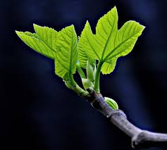 springtrees6